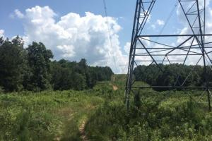 Hanceville Timber & Hunting Tract in Cullman County, AL (21 of 21)