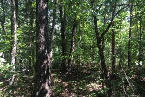 Hanceville Timber & Hunting Tract in Cullman County, AL (12 of 21)