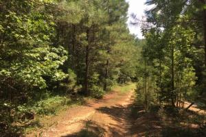 Hanceville Timber & Hunting Tract in Cullman County, AL (17 of 21)