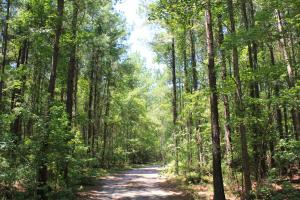 Ridgeville Large Acreage - Dorchester County SC