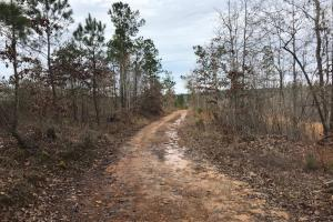 Brown Road Hunting Tract - Lamar County AL