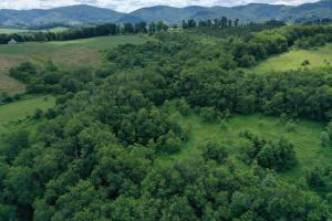 SPARTA TIMBER AND HUNTING TRACT - Alleghany County NC