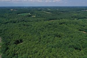 Eufola RD  Hunting and Timber Tract in Iredell, NC (30 of 44)