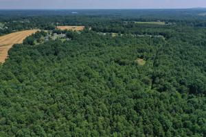 Eufola RD  Hunting and Timber Tract in Iredell, NC (38 of 44)