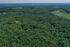 Eufola RD  Hunting and Timber Tract in Iredell, NC (2 of 44)