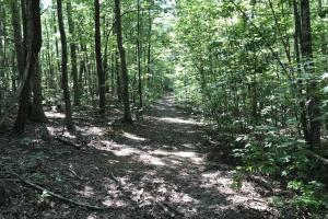 Eufola RD  Hunting and Timber Tract in Iredell, NC (21 of 44)