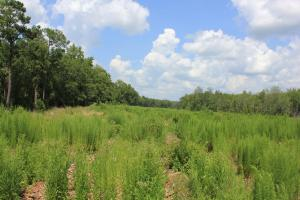 Jamestown Investment and Hunting Land in Berkeley, SC (5 of 7)