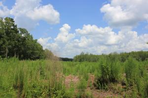 Jamestown Investment and Hunting Land in Berkeley, SC (4 of 7)