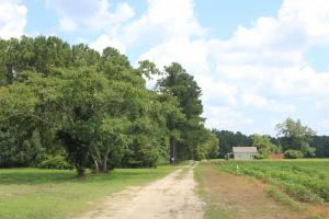 Jamestown Investment and Hunting Land in Berkeley, SC (3 of 7)