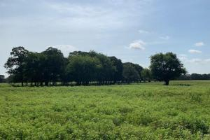 25 acres in Emory, Great Cattle Tract, Well Maintained Field with Scattered Timber - Rains County TX