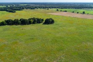 25 acre tract in Emory (5 of 16)