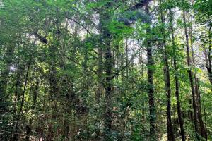 Hunting Land with Small Crop Acreage in Attala, MS (16 of 26)