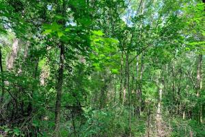 Hunting Land with Small Crop Acreage in Attala, MS (18 of 26)