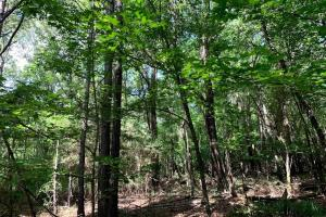 Hunting Land with Small Crop Acreage in Attala, MS (3 of 26)