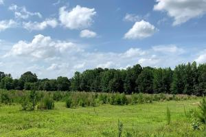 Hunting Land with Small Crop Acreage in Attala, MS (9 of 26)