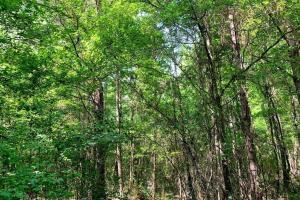 Hunting Land with Small Crop Acreage in Attala, MS (24 of 26)