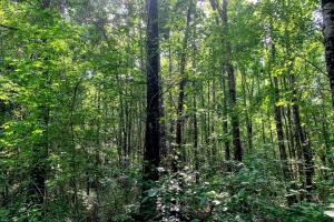 Hunting Land with Small Crop Acreage in Attala, MS (22 of 26)