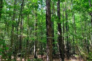 Hunting Land with Small Crop Acreage in Attala, MS (5 of 26)