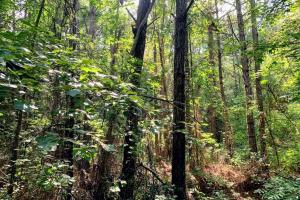 Hunting Land with Small Crop Acreage in Attala, MS (21 of 26)
