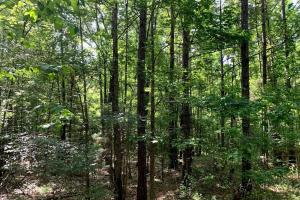 Hunting Land with Small Crop Acreage in Attala, MS (1 of 26)
