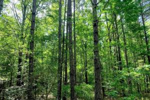 Hunting Land with Small Crop Acreage in Attala, MS (14 of 26)