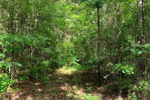 Hunting Land with Small Crop Acreage in Attala, MS (25 of 26)