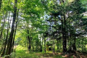 Hunting Land with Small Crop Acreage in Attala, MS (11 of 26)