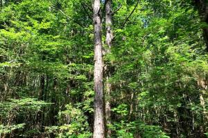 Hunting Land with Small Crop Acreage in Attala, MS (4 of 26)