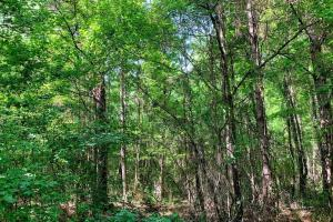 Hunting Land with Small Crop Acreage in Attala, MS (20 of 26)