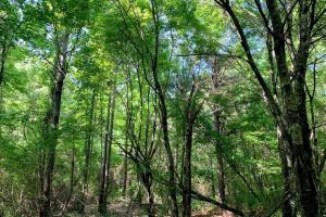 Hunting Land with Small Crop Acreage in Attala, MS (23 of 26)