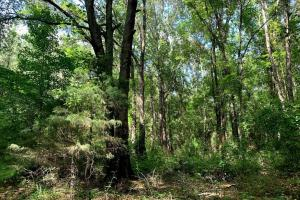 Hunting Land with Small Crop Acreage in Attala, MS (15 of 26)