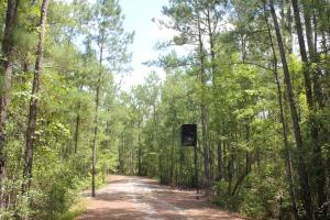 Suttons Hunting and Timber Investment - Williamsburg County SC