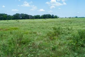 25 acres near Lake Fork, Pasture, Productive Recreational Tract, Great Home Site - Rains County TX