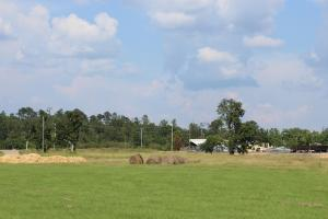 View of property from Columbia-Purvis Rd.  (8 of 9)