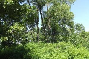 32 +/- Acres Tower rd in Grant County, WI (11 of 21)