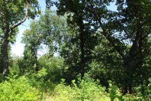 32 +/- Acres Tower rd in Grant County, WI (12 of 21)