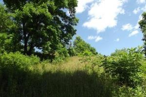 32 +/- Acres Tower rd in Grant County, WI (9 of 21)