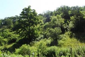 32 +/- Acres Tower rd in Grant County, WI (8 of 21)