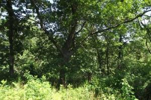 32 +/- Acres Tower rd in Grant County, WI (13 of 21)