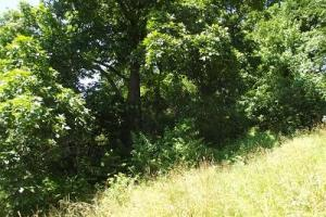 32 +/- Acres Tower rd in Grant County, WI (16 of 21)