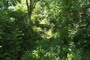 32 +/- Acres Tower rd in Grant County, WI (17 of 21)