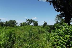 32 +/- Acres Tower rd in Grant County, WI (19 of 21)