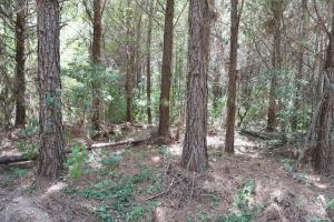 Marion Timber Investment and Hunting Tract in Perry, AL (3 of 9)