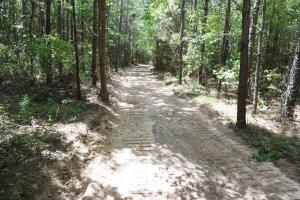 Marion Timber Investment and Hunting Tract in Perry, AL (5 of 9)