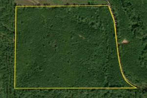 Marion Timber Investment and Hunting Tract - Perry County AL