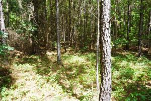 Marion Timber Investment and Hunting Tract in Perry, AL (8 of 9)