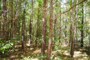 Marion Timber Investment and Hunting Tract in Perry, AL (4 of 9)