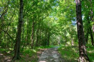 Chickasawhay River Hunting Lodge and Timber Investment  in Clarke, MS (6 of 47)