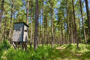 Chickasawhay River Hunting Lodge and Timber Investment  in Clarke, MS (2 of 47)