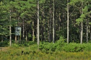 Chickasawhay River Hunting Lodge and Timber Investment  in Clarke, MS (12 of 47)
